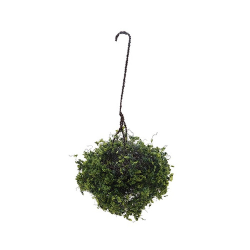 Hanging Basket: Variegated Green, Large (CAHBL06)