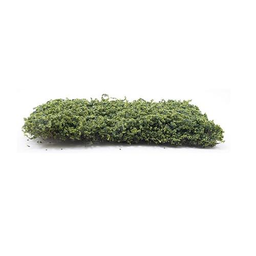 Green Ivy Vine (CAGV)