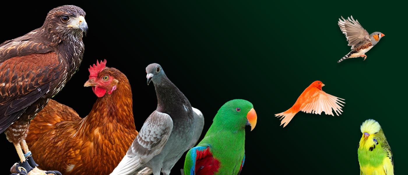 bird-supplements-bird-feeds.png