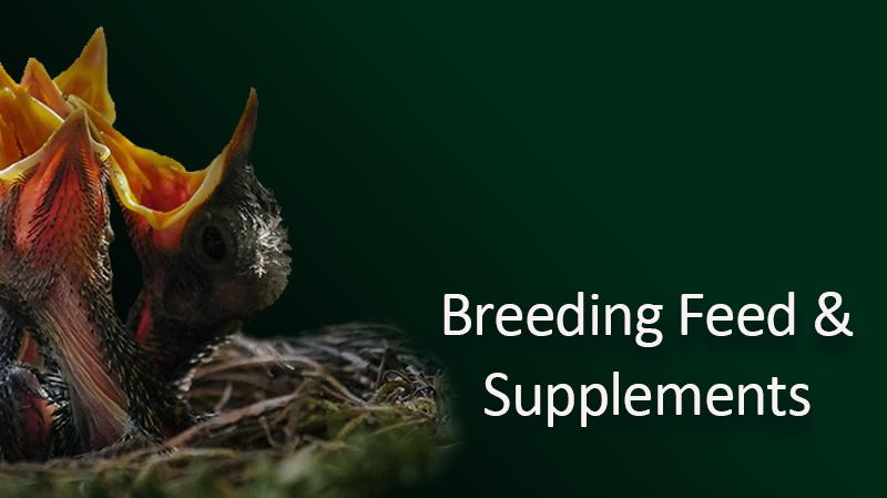 breedind-feed-.png