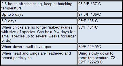 Brooder temperatures for birds
