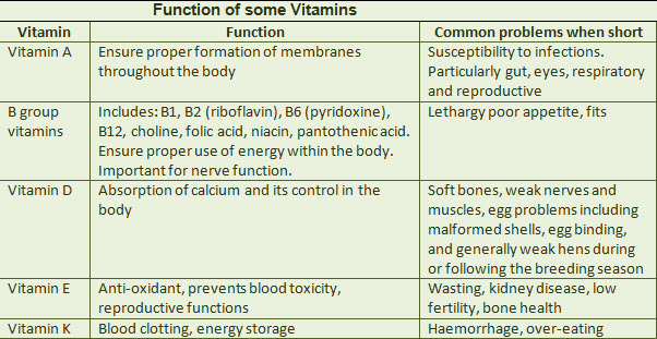 function-of-bird-vitamins.jpg