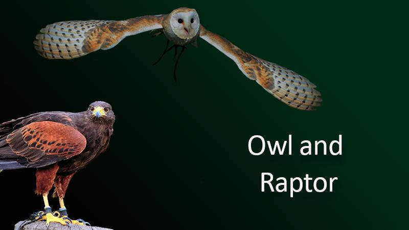 owl-raptor.png