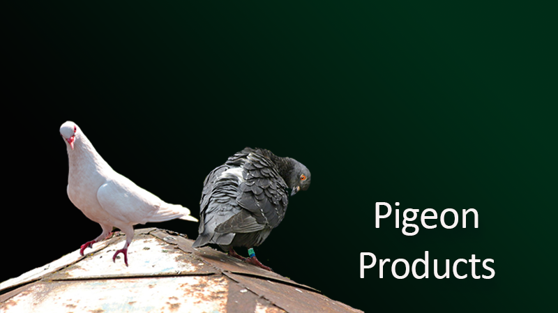 pigeon-products.png