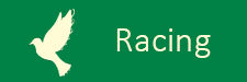 pigeon-racing-green.png