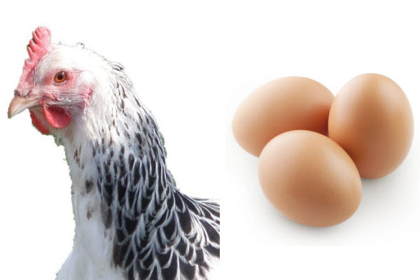 poultry-and-egg-laying.jpg