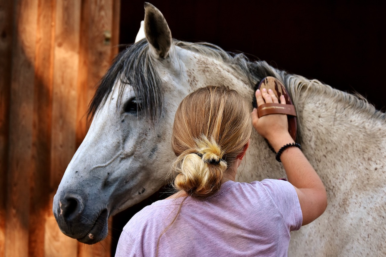 Grooming Horse with a curry brush