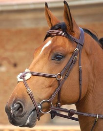 Dyon Fancy Padded Figure 8 Bridle
