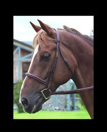 Dyon Hunter Fancy Bridle