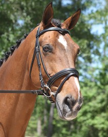 KL Select Italia Pirouette Dressage Bridle