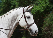 Red Barn by KL Select Synergy Mono Crown Hunter Bridle