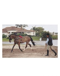 Pessoa Lunging Rig Training System
