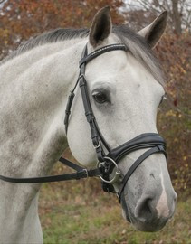 Red Barn by KL Select Piaffe Dressage Bridle