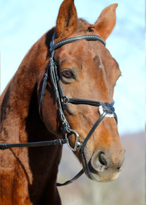 KL Select Phoenix Jumper Bridle