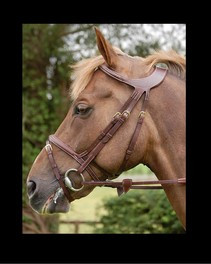 Dyon Difference Collection Flash Bridle