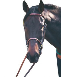 HDR Raised Fancy Snaffle Bridle