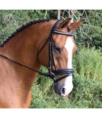 KL Select Black Oak Larkspur Bridle