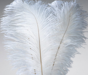 "FEATHERS - OSTRICH WING - WHITE BULK (13""-15"")"
