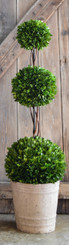 PRESERVED BOXWOOD TOPIARY - TRIPLE BALL - 40""