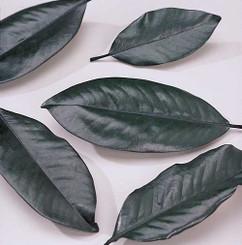 MAGNOLIA LEAVES - PRESERVED BULK - GREEN