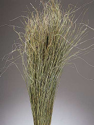 MEADOW GRASS - NATURAL - 12 BUNCHES