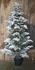 "SNOW FLOCKED PINE TREE - MD - 56"""
