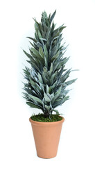 PRESERVED MAHONIA FROSTED CONE TOPIARY - 24""