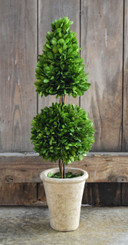 PRESERVED BOXWOOD TOPIARY - MIXED - 24""