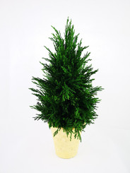 EMERALD CYPRESS CONE TOPIARY 16""
