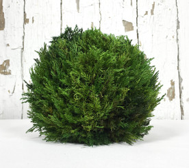 "TUSCAN CYPRESS BALL - 8"" - MIN. 2"