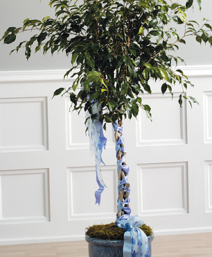 Tree of Rememberance