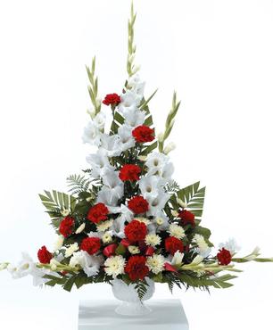 Gladiolus Grandeur