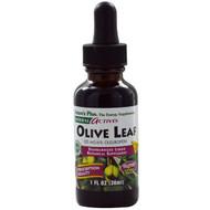 3 PACK of Natures Plus, Herbal Actives, Olive Leaf, Alcohol Free, 1 fl oz (30 ml)