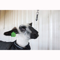 CRUISE CONTROL SHEEP & GOAT HALTER