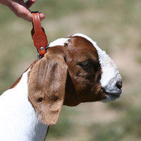 GOAT CHAIN  NATURAL LEATHER