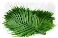 Emerald Palm Pack of 15