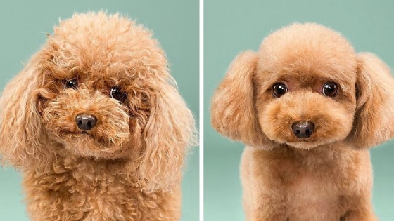 5 Unique Grooming Styles For Dogs Kenchii Grooming