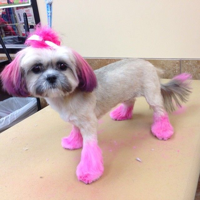 Ombre hair dog grooming style