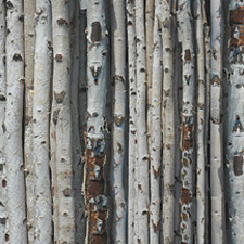 Birch Wood 12x12 Scrapbook paper