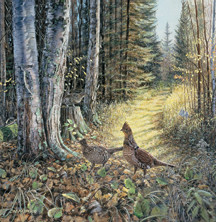 Grouse by Jim Kasper