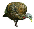 Avian-X AVX8007 8007 LCD Feeder Hen - Turkey Decoy, Full Body, Inflatable - AVX8007