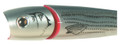 "Creek Chub I6600JPBS Knuckle Head - Popper, 5"", 1 1/2 oz, Baby Striper - I6600JPBS"