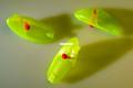 Krippled 11080-KAURGLCH Anchovy - U-Rig-M Head, Glow/Chartreuse - 11080-KAURGLCH