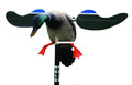 Mojo HW4401 Motorized Baby Mallard - Drake Spinning Wing Decoy, Support - HW4401