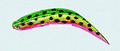 "Yakima Bait 951-GWTM Flatfish - Wiggling Plug, #F-3, 1-1/4"", Treble - 951-GWTM"