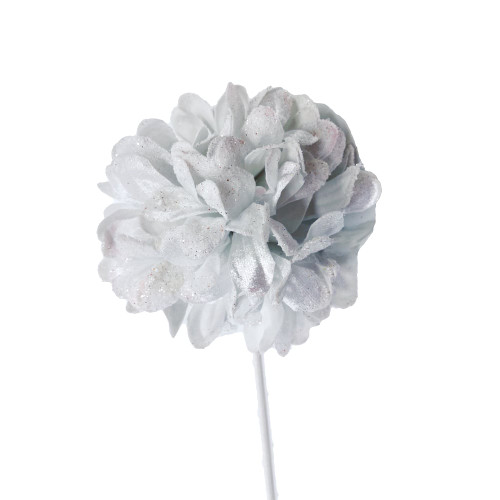 White Frosted Chrysanthemum Flower
