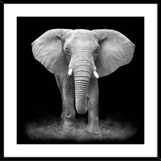 Elephant 50x50cm