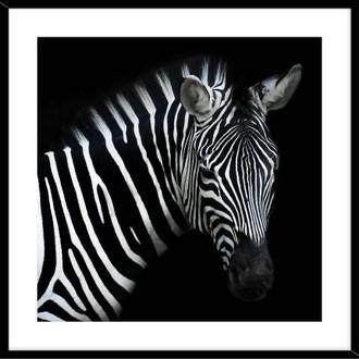Zebra 50x50cm