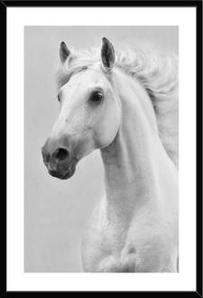 Horse 50x50cm