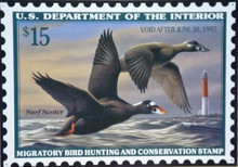 Photo of FEDERAL DUCK HUNTING STAMP 1997 WITH DRAWING OF SURF SCOOTERS